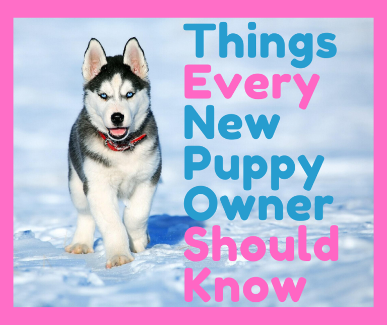 Things Every New Puppy Owner Should Know