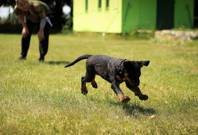 5 Tips To Remember When Training Your Puppy