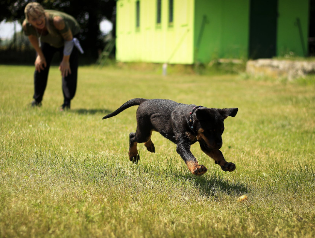 Tips & Tricks To Training Your New Puppy