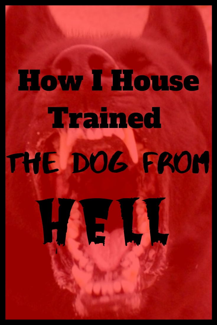 """How I House Trained """"The Dog From Hell"""""""