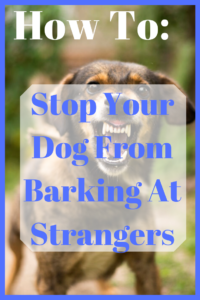 how to stop your dog from barking at strangers