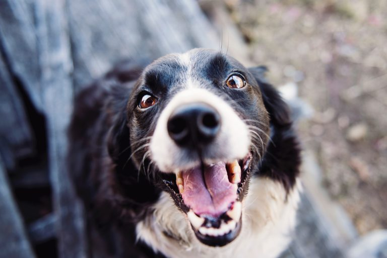 Mental Stimulation Games For Dogs