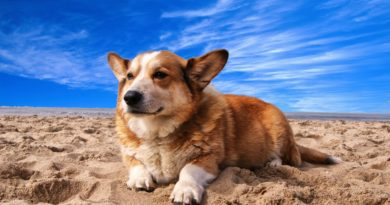 weight loss training tips for dogs