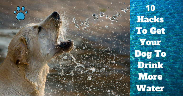10 (Super Simple) Hacks To Encourage Your Dog To Drink More Water