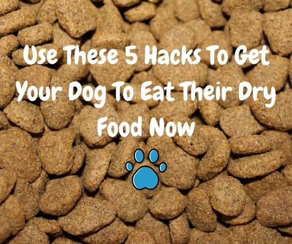 How To Get A Dog To Eat Dry Food