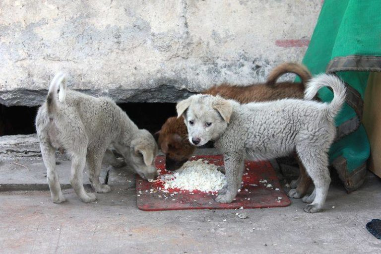 Can Puppies Eat Rice? Is Rice Safe For a Puppy to Eat!