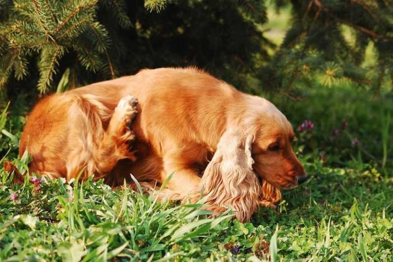 Best Shampoos For Itchy Dogs [Fast Scratch Relief]