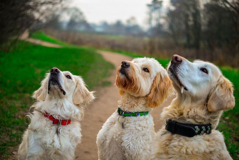 dogs being lured by treats