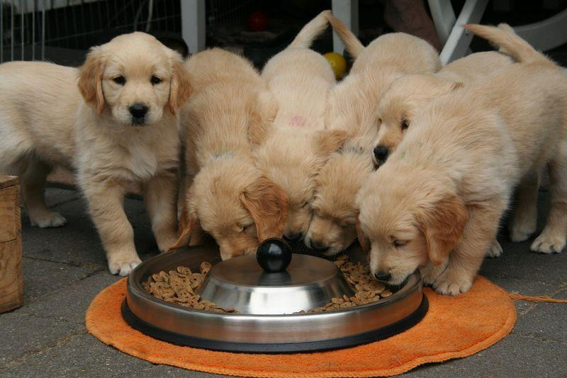 stop food aggression in puppies