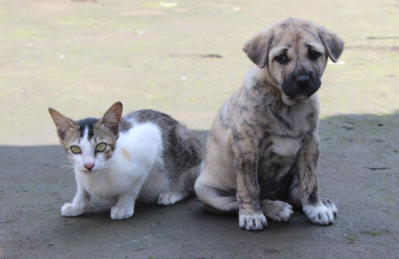 introduce a puppy to a cat