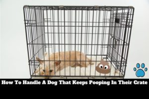 dog keeps pooping in crate