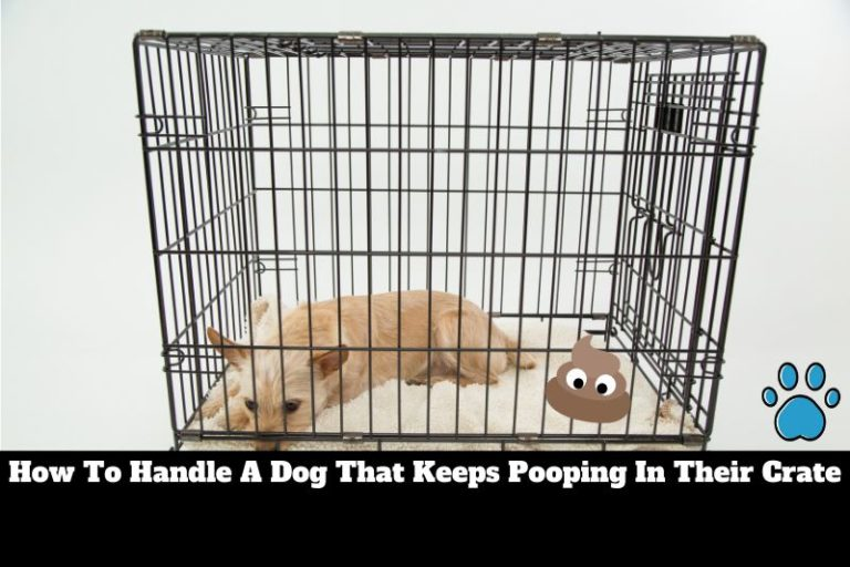 Dog Keeps Pooping in Crate | How To Get Them To Stop Fast!