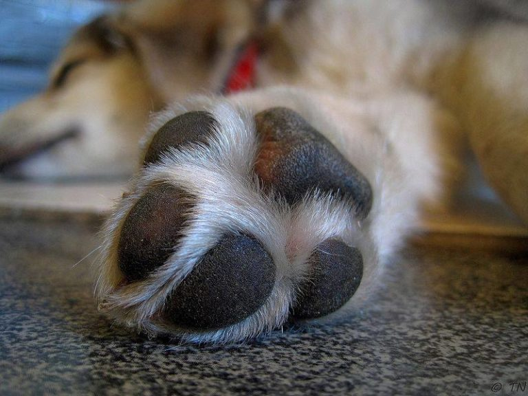 Why Do Dogs Chew on Their Own Feet: Does This Mean Something Is Wrong?
