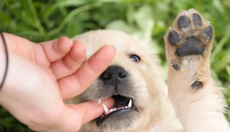 How to Get Your Puppy to Stop Biting Your Hands