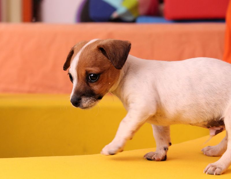 what to feed a 5 week old puppy
