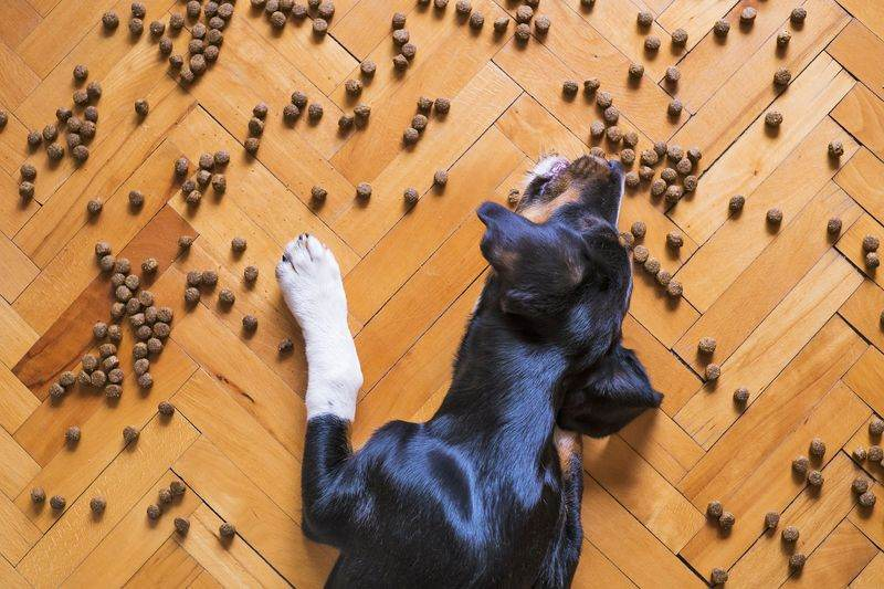 How to Transition a Puppy to Adult Dog Food?