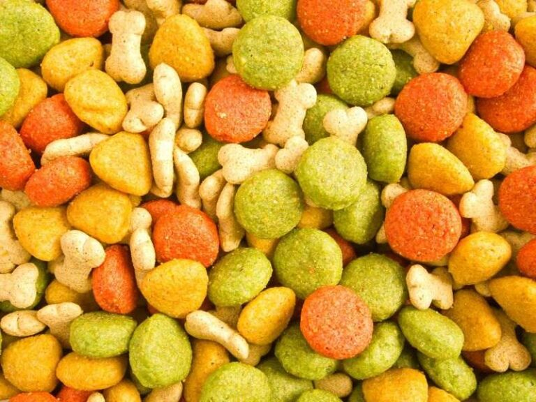 Can puppies eat regular dog food? What's the difference?
