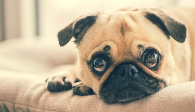 Can My Puppy Eat Yeast? Signs, Symptoms, Treatments & Prevention