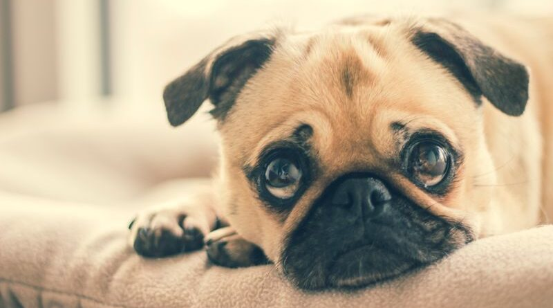 puppy eat yeast; signs, symptoms, treatments