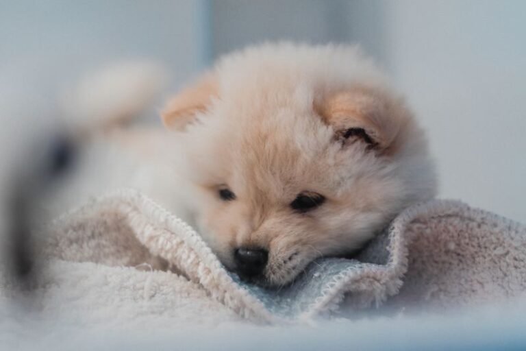 Why Is My 4-Week Old Puppy Constipated: Probable Reasons and Easy Cures