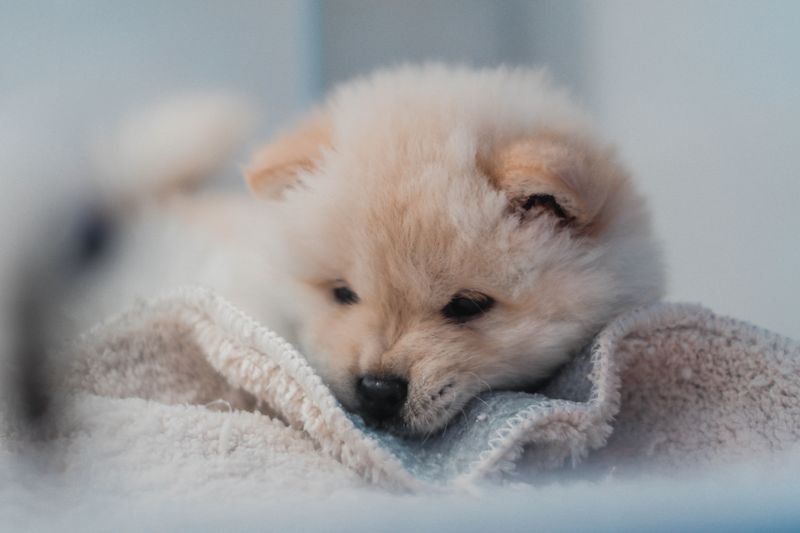 constipation symptoms in 4 week old puppy