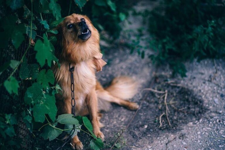 Demand Barking For Attention – How To Get Your Dog To Stop This Today!