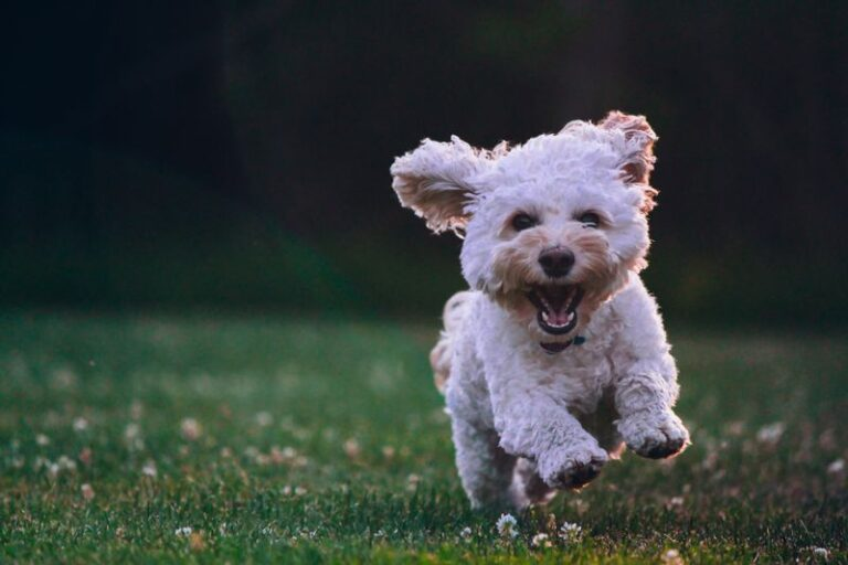 Demand Barking In Puppies: 5 Simple Tips To Stop It Today!