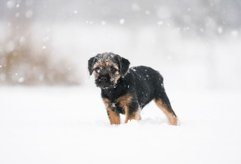 potty training a puppy in the winter