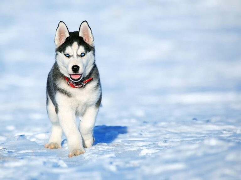 Potty Training Puppy In Winter: How To Do It Effortlessly