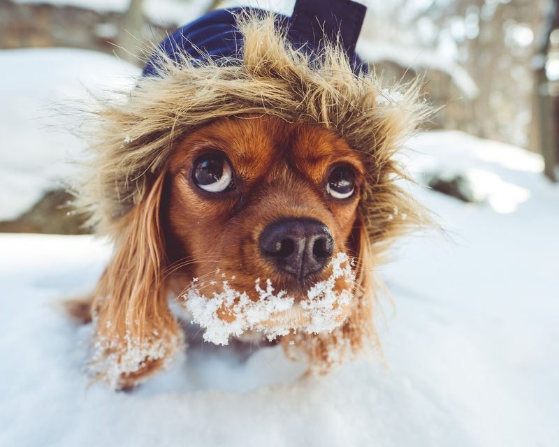 things required for potty-training puppy in winter