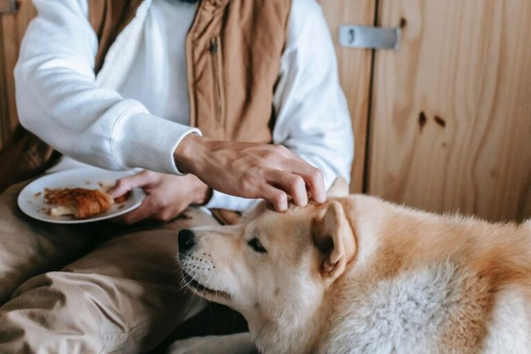 Will A Dog Starve Itself To Death? Best Solution for a Dog That Will Not Eat